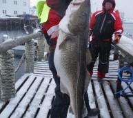 34 kg